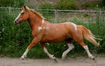 I can trot