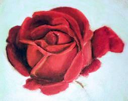 Pastel rose study