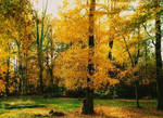 Fall in my backyard by bewilderedconfused