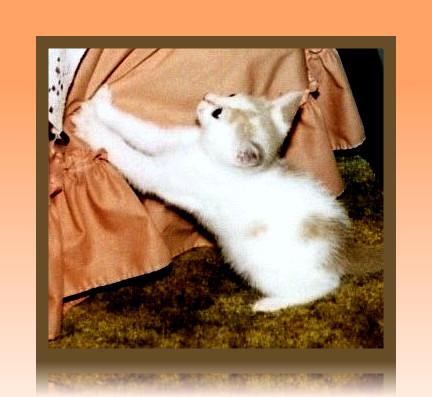 What kitties do by bewilderedconfused