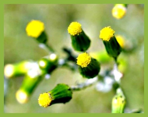 Waiting to Bloom by bewilderedconfused