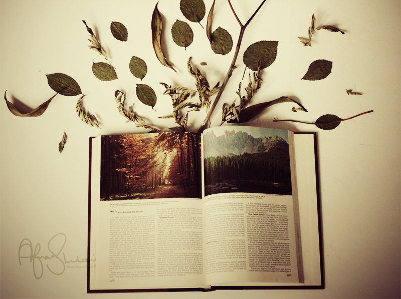 Book  Imagination_by_nanableedsstars-d36eq2d