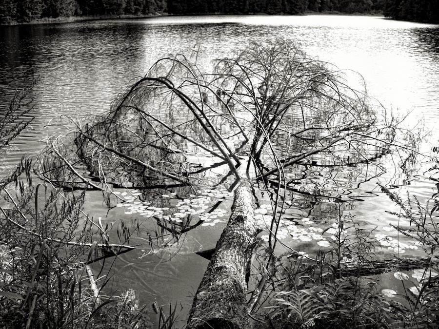 Fallen Tree by ClaudeDupont