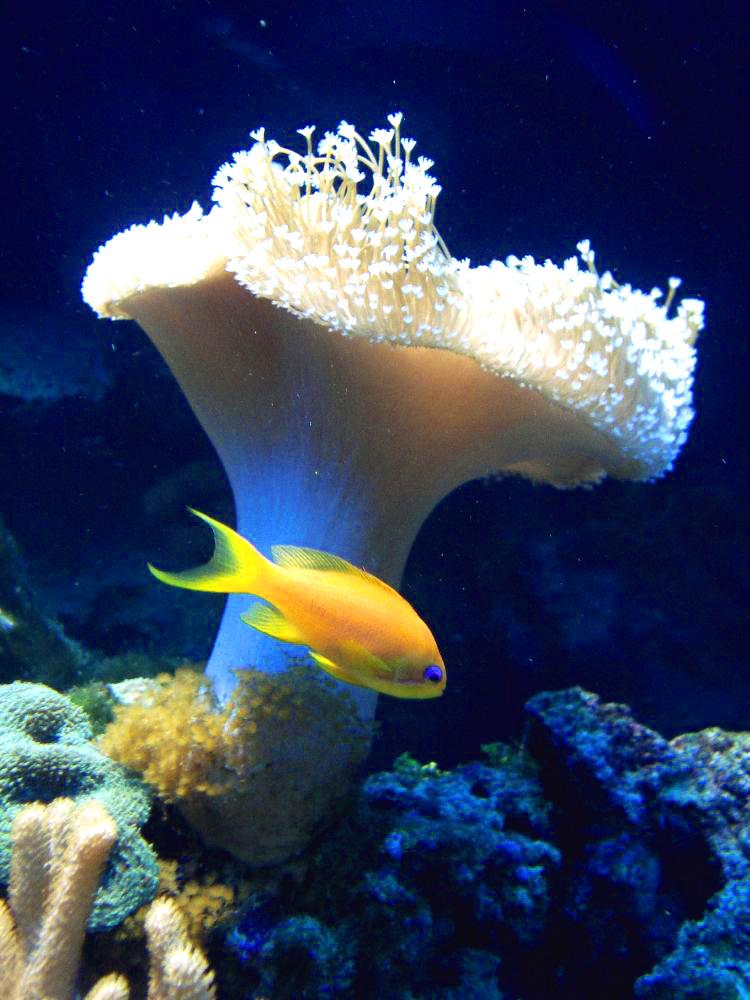 ocean's life VII by Sansex