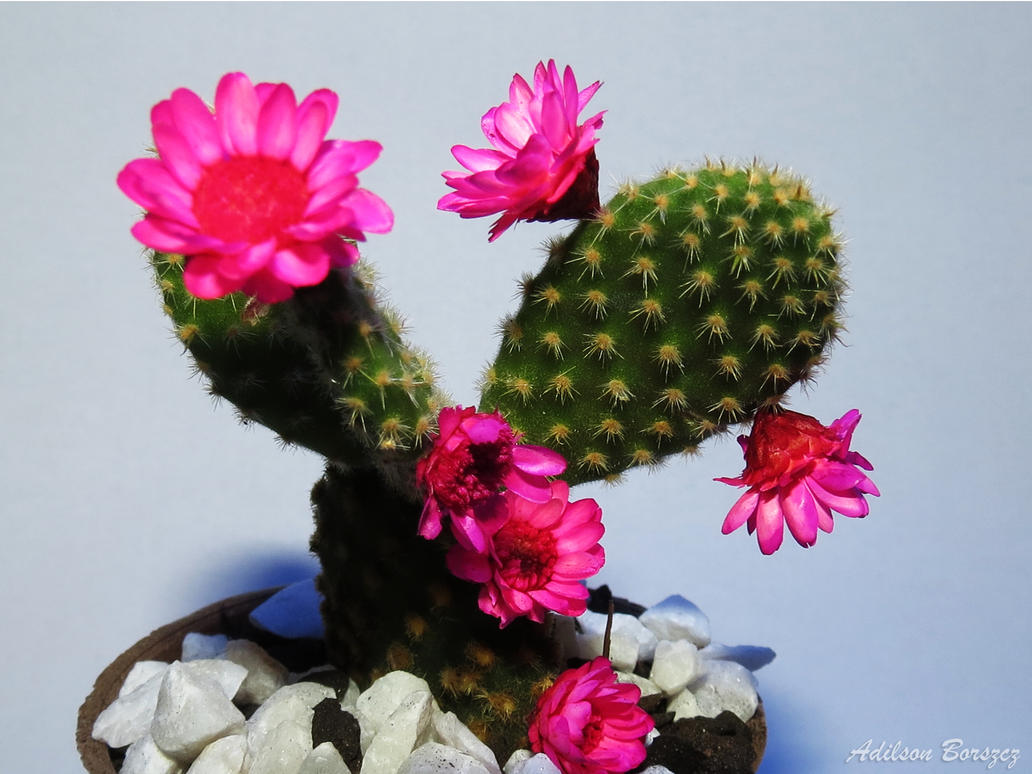 Cactus With Fake Flowers By Mczero On Deviantart