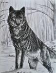 A Black Wolf