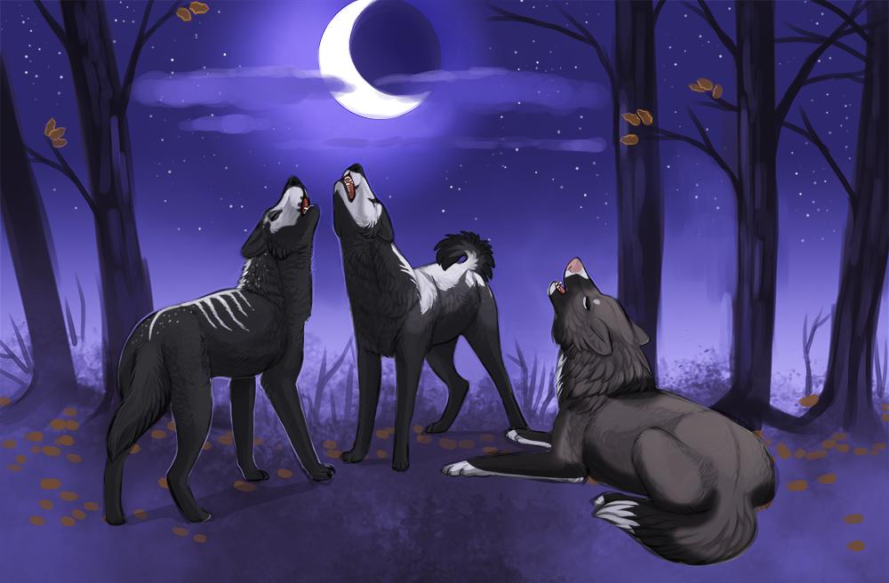 Midnight Howl by little-owlette