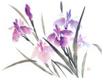 Sumie irises