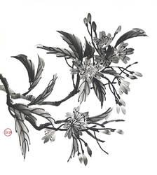 [Sumie] Sakura