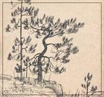 [Graphics] Pine-trees sketch