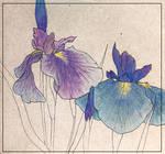 [Graphics] Irises