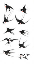[Study process] Studying swallows