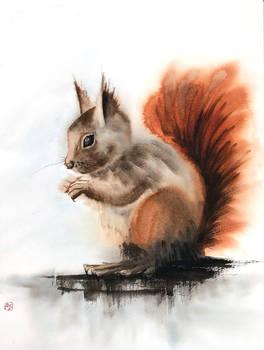 [Watercolor] Squirrel