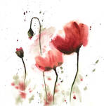 [Watercolor] Poppies