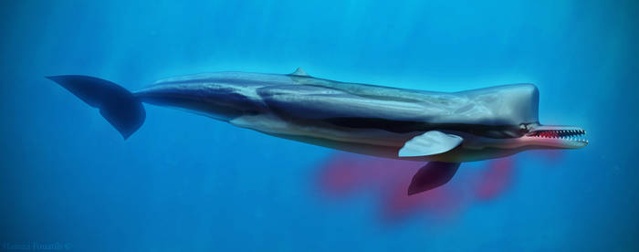 Killer sperm whale