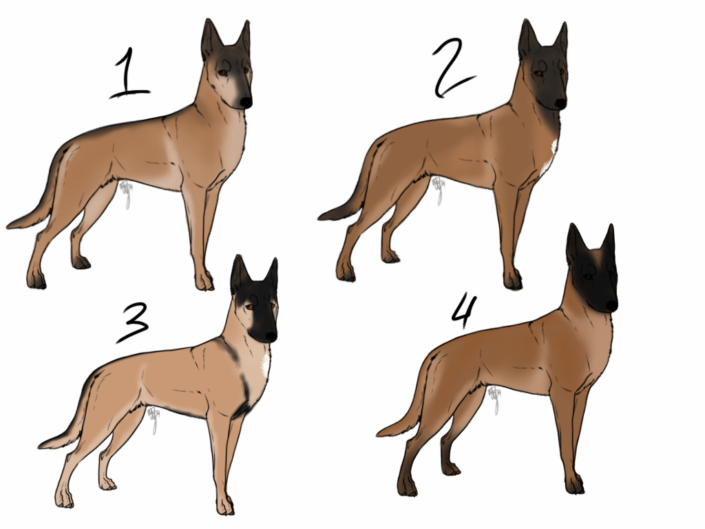 Belgian Malinois Imports CLOSED By 4dogowner On DeviantArt
