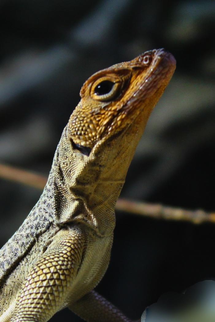 Exotic Lizard by Hrasulee