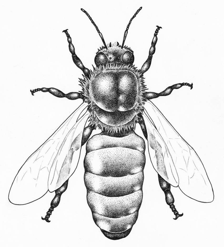 Honeybee by Saevus
