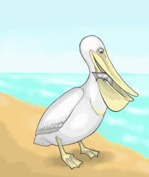 Pelican by Saevus