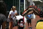 Raptor in Darling Harbour 2