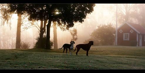 Doggy morning