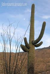 Saguaro Moon Rising
