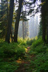Forests of Seattle