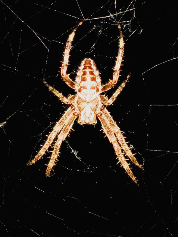 Arachnophobia by Skidplates