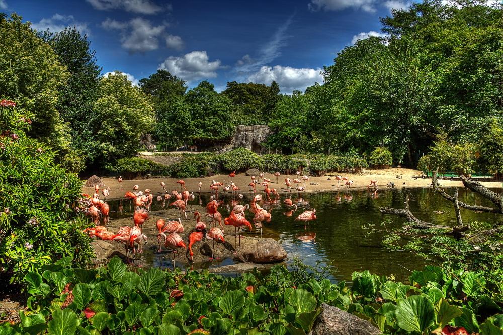 Flamingos by chevyhax