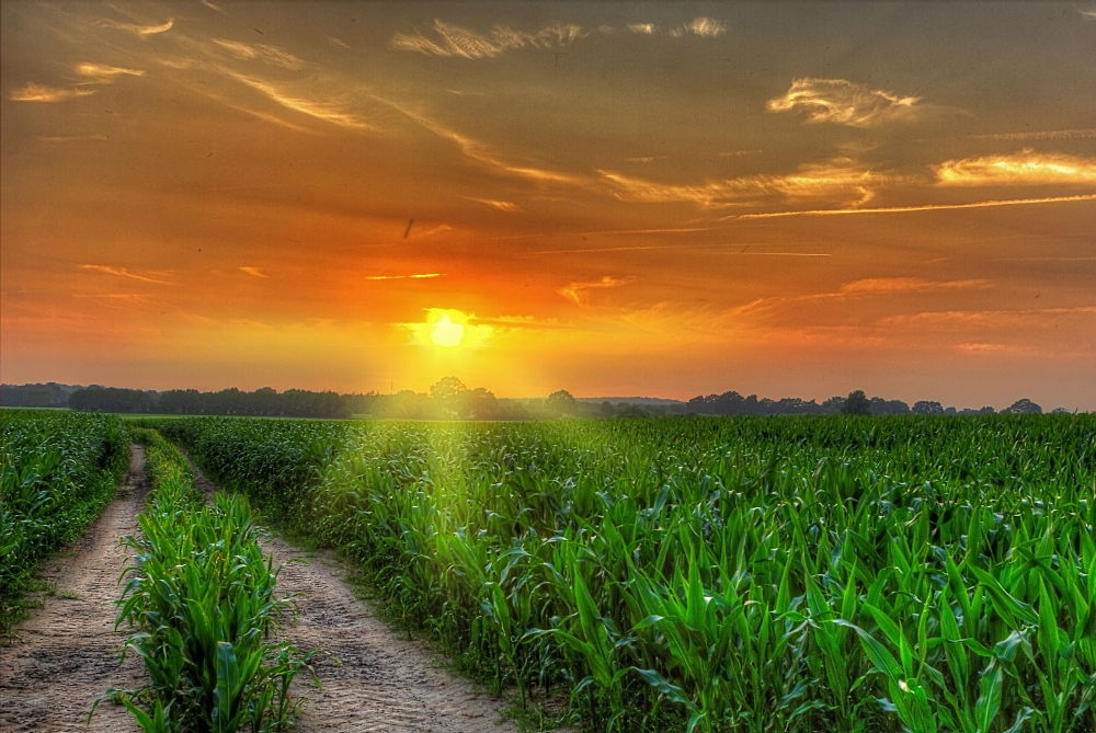 art criticism the cornfield The associated press delivers in-depth coverage on today's big story including top stories, international, politics, lifestyle, business, entertainment, and more.