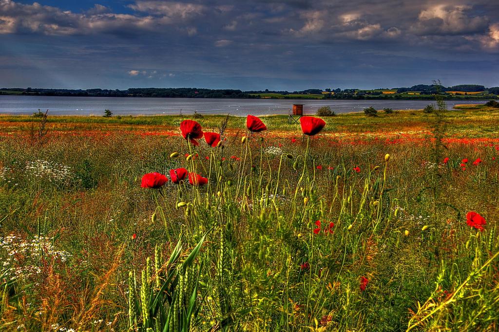 Poppy by chevyhax