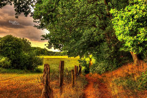 The Path To The Fields