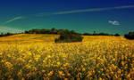 Swedish Summerday