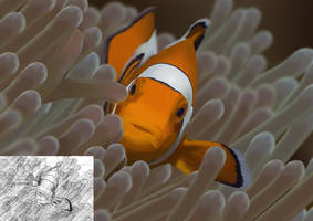 Amphiprion ocellaris by Sadir89