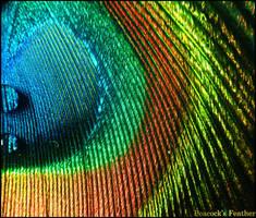 Colourful... by Sadir89