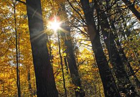 Fall by Vamaena