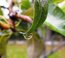 --Art Trade-- Dripping Leaf by Vamaena