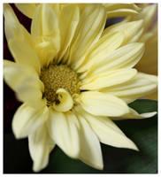 Bouquet 3 by Vamaena