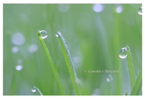 Morning Dew by Vamaena