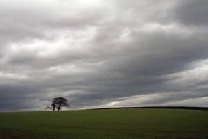 tree and sky by matrija-stock