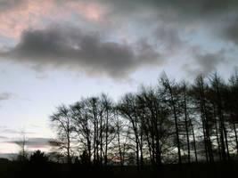 trees and sky by matrija-stock