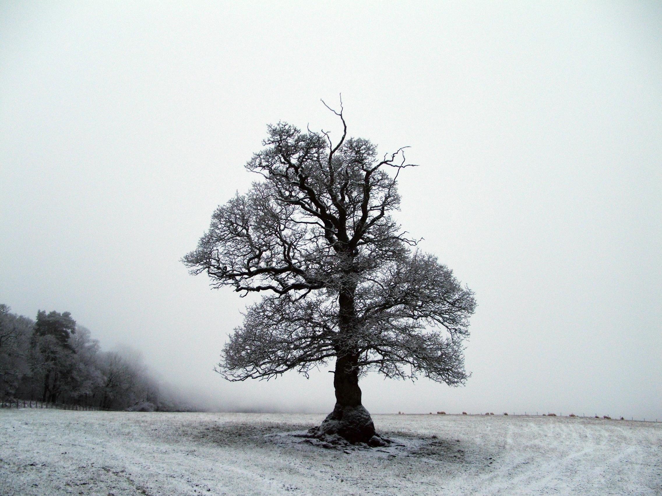 tree 3 by matrija-stock