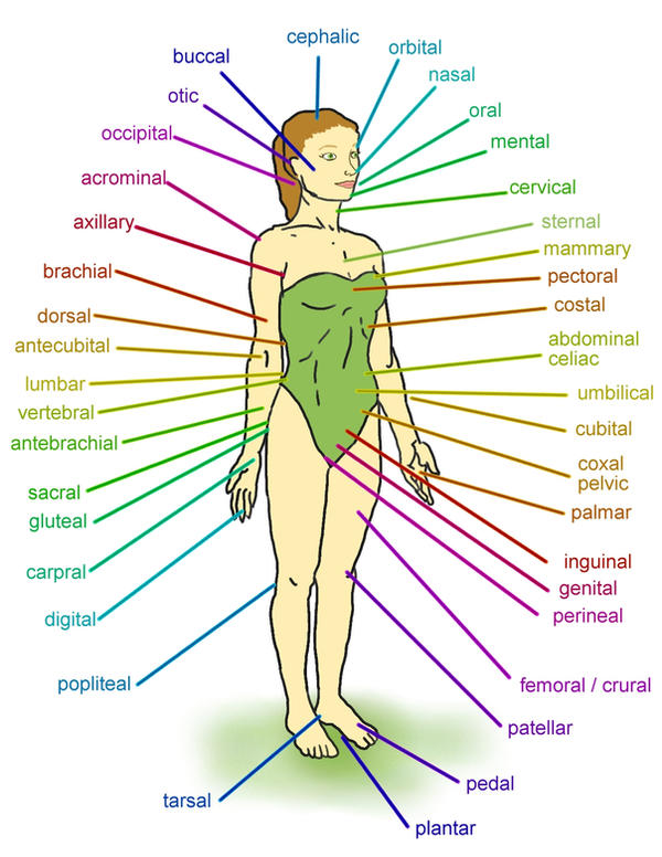 labeling the human body by Love2B on DeviantArt