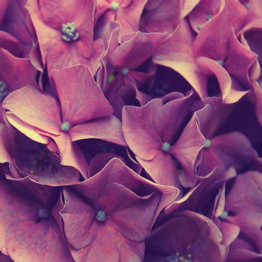 soft purple by missmercer007