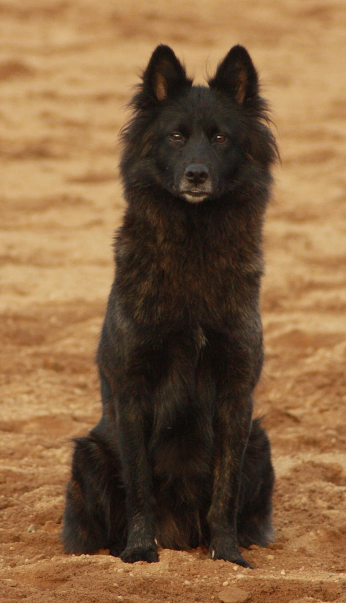 Faux Fur Costume Curvy Solid Black Wolf Tail ...  Solid Black Wolf