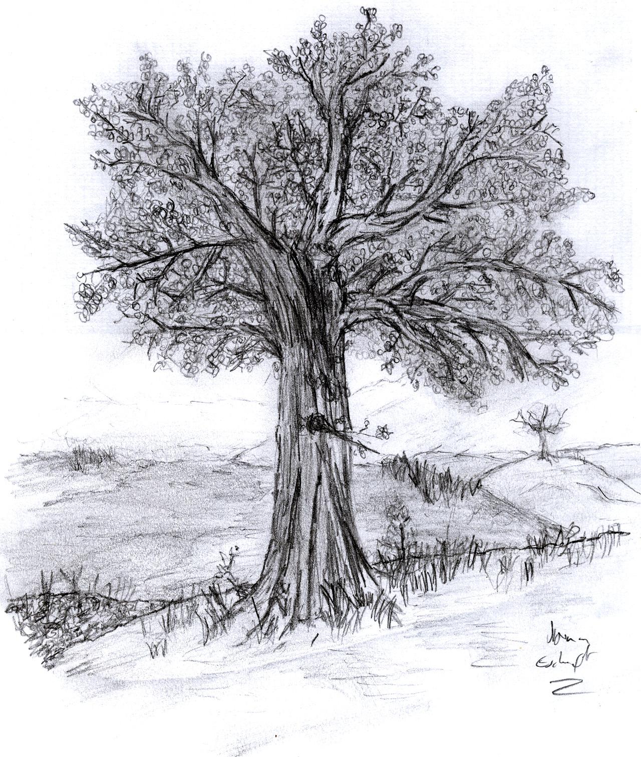 Tree by Eschenfelder