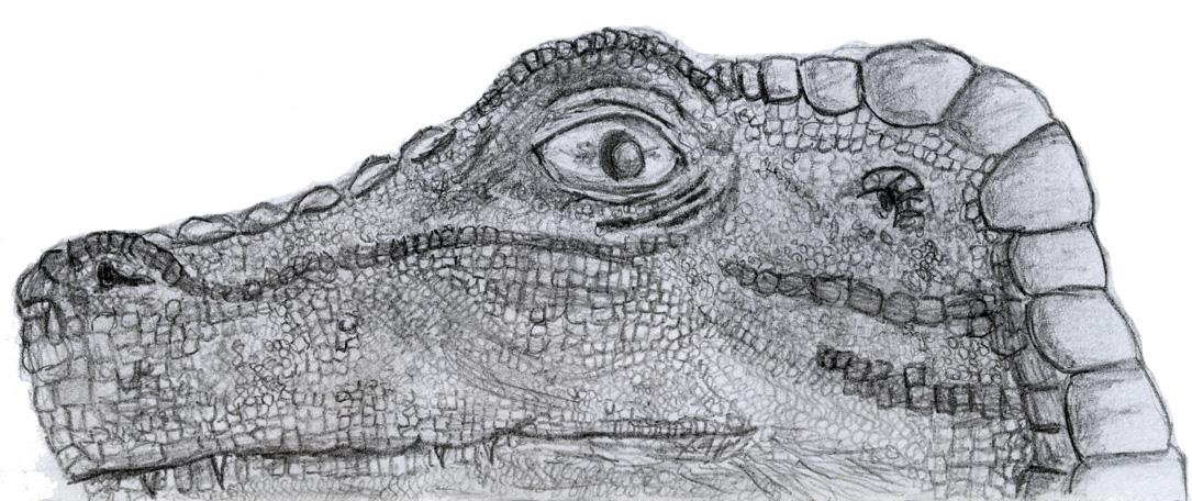 Velociraptor by Eschenfelder