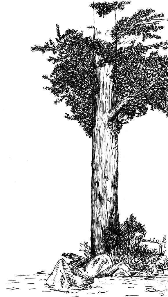 Another Tree by Eschenfelder