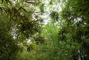 Bamboo Forest by Shobie-stock