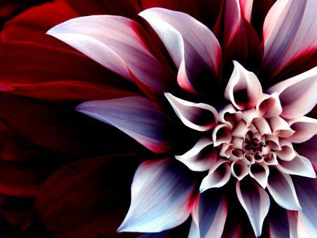CVECE - Page 2 Beautiful_Flower_by_fayefaye89